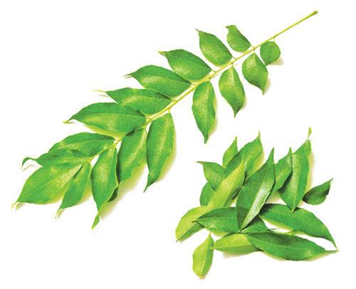 5 loại thảo dược có tác dụng chữa bệnh - 1