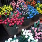 Du lịch - Chợ hoa nổi duy nhất trên thế giới tại Amsterdam