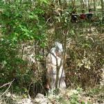 Tin tức trong ngày - Xác chết lõa thể treo lơ lửng trên cây