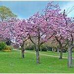 Du lịch - Ngắm London ngập tràn sắc hoa