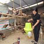 Chim trĩ cũng dương tính cúm A/H5N1