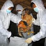 Sức khỏe đời sống - TQ: Ghi nhận thêm ca tử vong do cúm H7N9