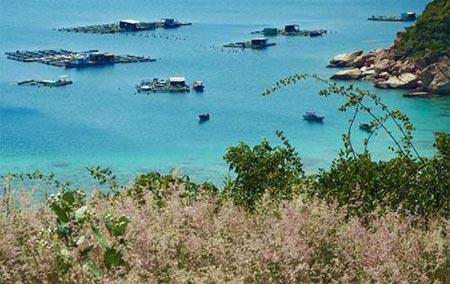 Say cảnh tuyệt sắc trong vịnh Cam Ranh - 2