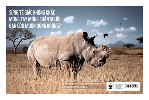 Sừng tê giác không tăng khả năng tình dục - 1