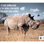 Sức khỏe đời sống - Sừng tê giác không tăng khả năng tình dục