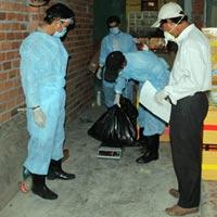 Công bố dịch cúm H5N1 trên đàn chim yến