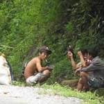 Tin tức trong ngày - Lâm tặc lại triệt hạ sưa ở Phong Nha-Kẻ Bàng