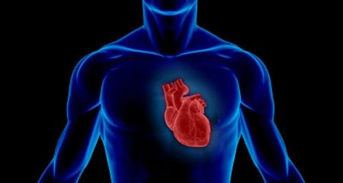 Phát hiện gen làm 'tan nát' trái tim - 1