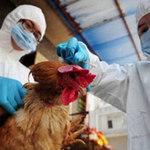 Không loại trừ H7N9 lây từ người sang người