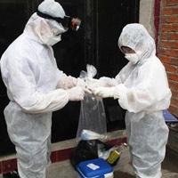 Cách nào chống dịch cúm A/H5N1?