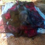 Khai quật xong thi thể 5 phu trầm bị giết