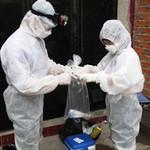 Sức khỏe đời sống - Cách nào chống dịch cúm A/H5N1?