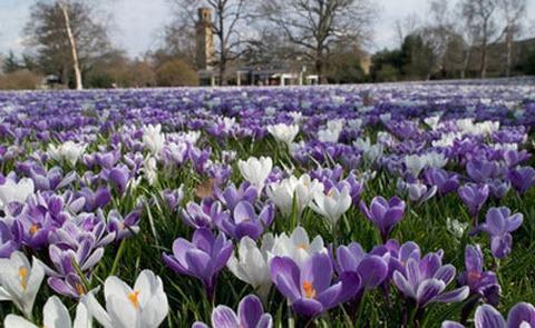 5 lễ hội hoa tuyệt vời trên thế giới - 4