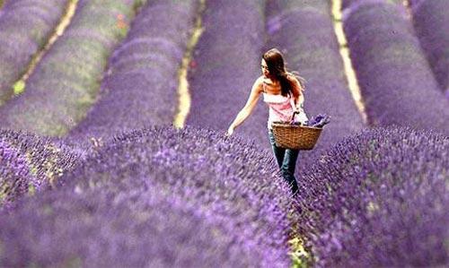 5 lễ hội hoa tuyệt vời trên thế giới - 5