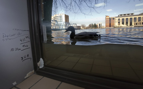 Ảnh đẹp: Rùa tắm nắng trên bờ hồ - 7