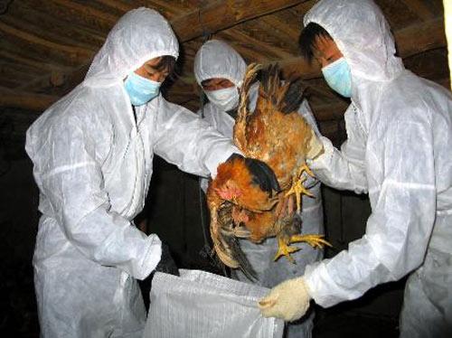 Cúm H7N9: Cảnh giác nhưng không hoang mang - 1