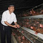 Thị trường - Tiêu dùng - Giá trứng tăng, nông dân vẫn lỗ!