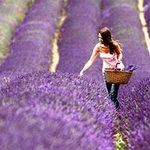 Du lịch - 5 lễ hội hoa tuyệt vời trên thế giới