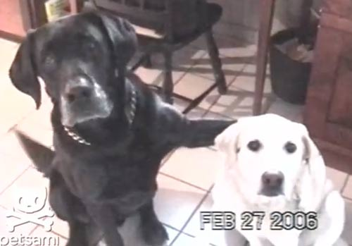 Top clip hài: Chó chở gà đi bán - 3