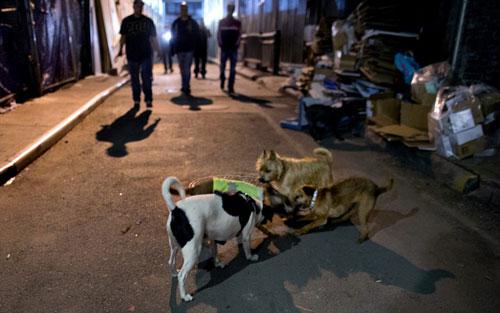 Mỹ: Huy động chó diệt chuột trên đường phố - 1