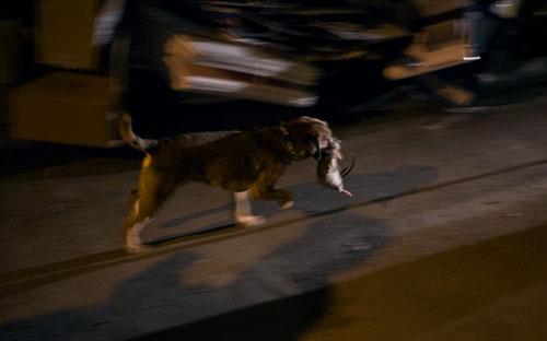 Mỹ: Huy động chó diệt chuột trên đường phố - 10