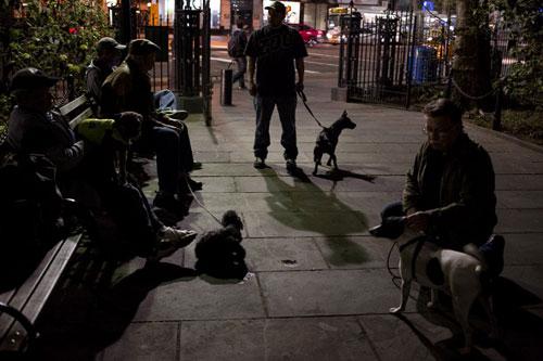 Mỹ: Huy động chó diệt chuột trên đường phố - 9