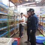 Thị trường - Tiêu dùng - Làng buôn cá cảnh xuyên quốc gia
