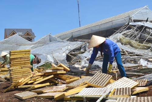 Chùm ảnh: Nhà vườn Đà Lạt tả tơi sau mưa đá - 10