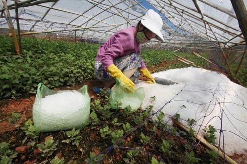 Chùm ảnh: Nhà vườn Đà Lạt tả tơi sau mưa đá - 3