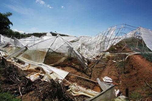 Chùm ảnh: Nhà vườn Đà Lạt tả tơi sau mưa đá - 4