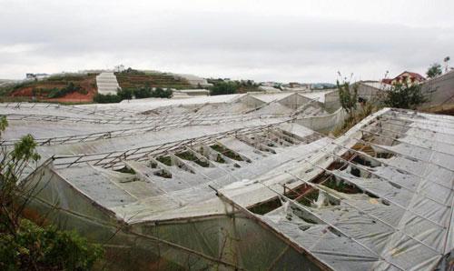 Chùm ảnh: Nhà vườn Đà Lạt tả tơi sau mưa đá - 5