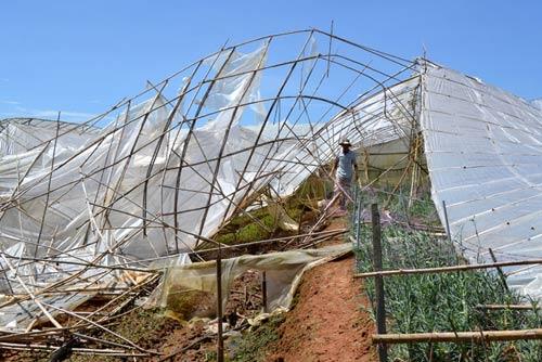 Chùm ảnh: Nhà vườn Đà Lạt tả tơi sau mưa đá - 9
