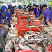 Xuất khẩu tôm, cá tra tăng mạnh trong tháng 5