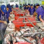 Xuất nhập khẩu - Xuất khẩu tôm, cá tra tăng mạnh trong tháng 5