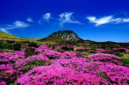 Thiên đường tình yêu Hàn Quốc làm thổn thức triệu trái tim - 9
