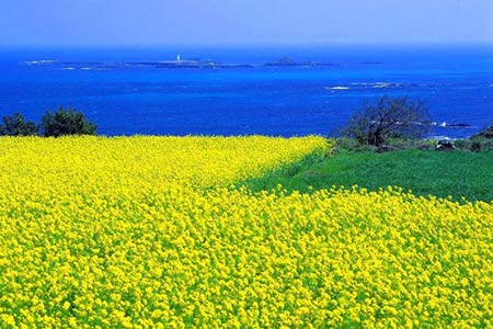 Thiên đường tình yêu Hàn Quốc làm thổn thức triệu trái tim - 7
