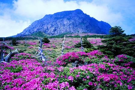 Thiên đường tình yêu Hàn Quốc làm thổn thức triệu trái tim - 8