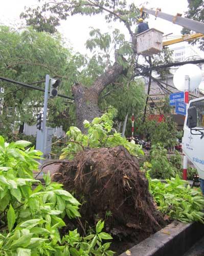TP.HCM: Gió lốc làm cây xanh bật gốc - 2