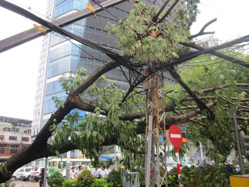 TP.HCM: Gió lốc làm cây xanh bật gốc - 3