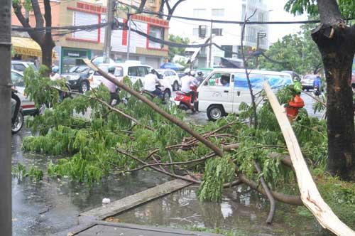 TP.HCM: Gió lốc làm cây xanh bật gốc - 4