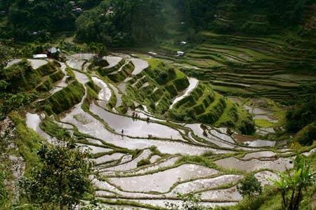 Choáng ngợp ruộng bậc thang Philippines - 2