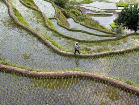 Choáng ngợp ruộng bậc thang Philippines - 4