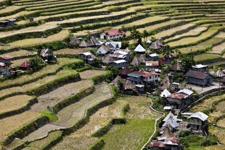 Choáng ngợp ruộng bậc thang Philippines - 8