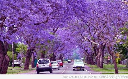 Chiêm ngưỡng những con đường đẹp như tuyệt tác nghệ thuật - 4