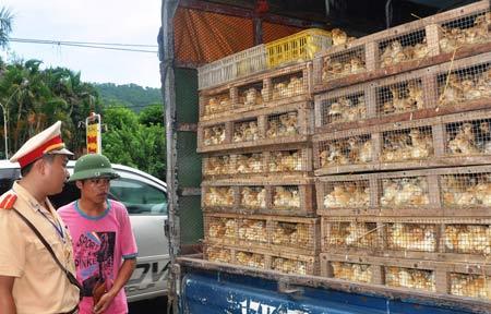 4 tháng, bắt giữ hơn 128 tấn gà nhập lậu - 1
