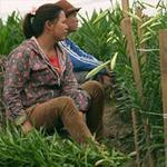 Thị trường - Tiêu dùng - Nông dân khổ sở với giống cây Trung Quốc