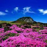 """Thổn thức trái tim vì  """" thiên đường """"  ở xứ Hàn"""