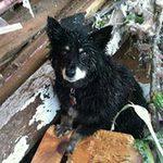 Tin tức trong ngày - Lốc xoáy ở Mỹ: Chú chó không chịu rời xác chủ