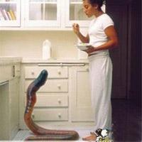 Cô gái nuôi giun dài 2m làm thú cưng