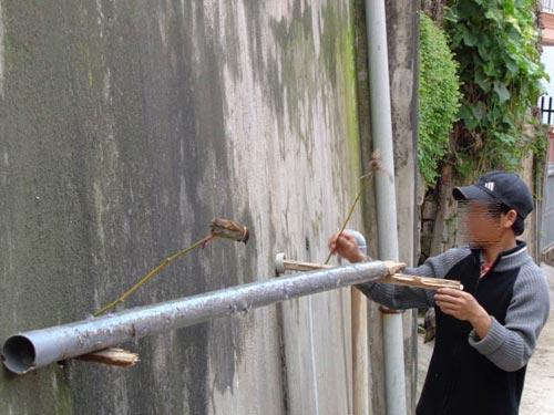 Hạ sát chim trời ngay trung tâm Đà Lạt - 2